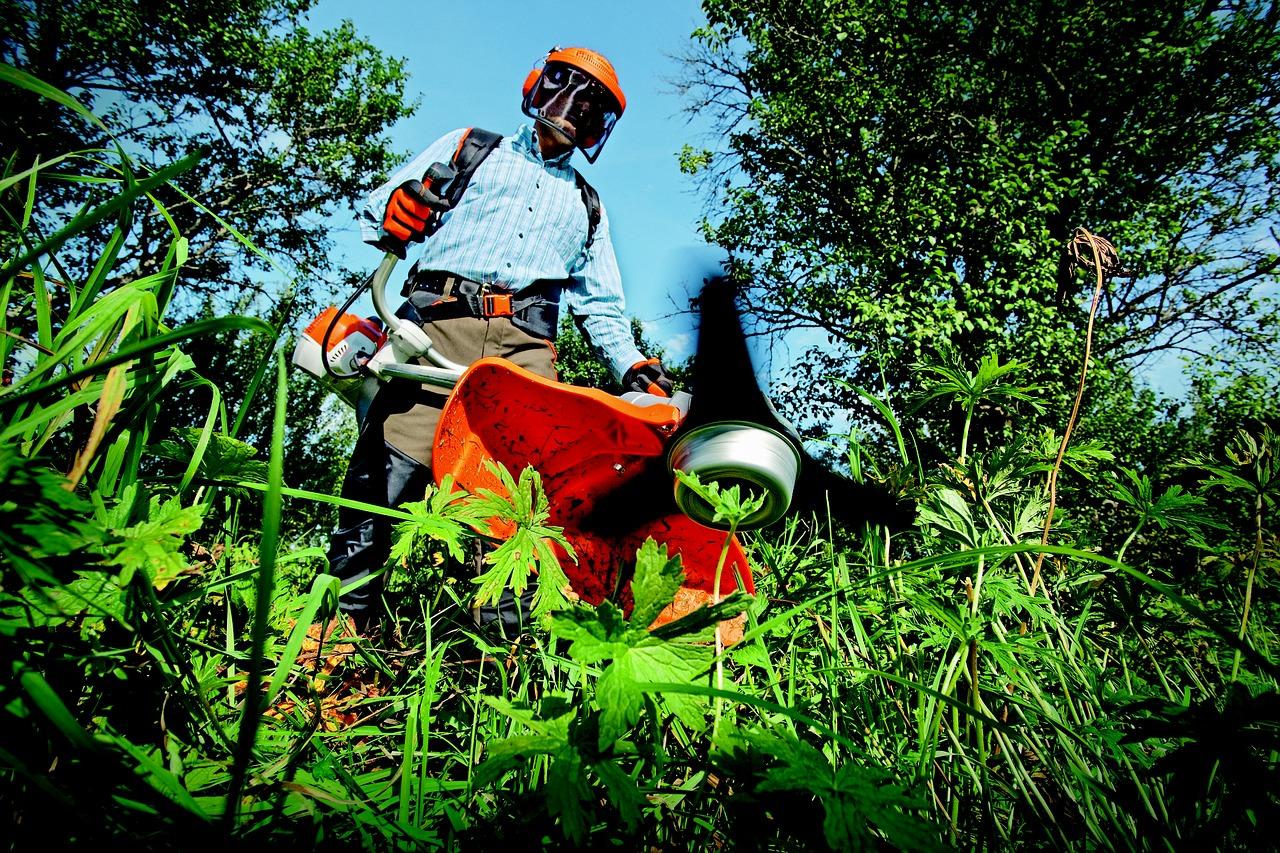 giardinaggio cura delle piante