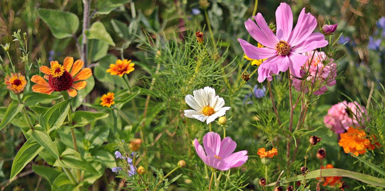 giardinaggio notizie piante
