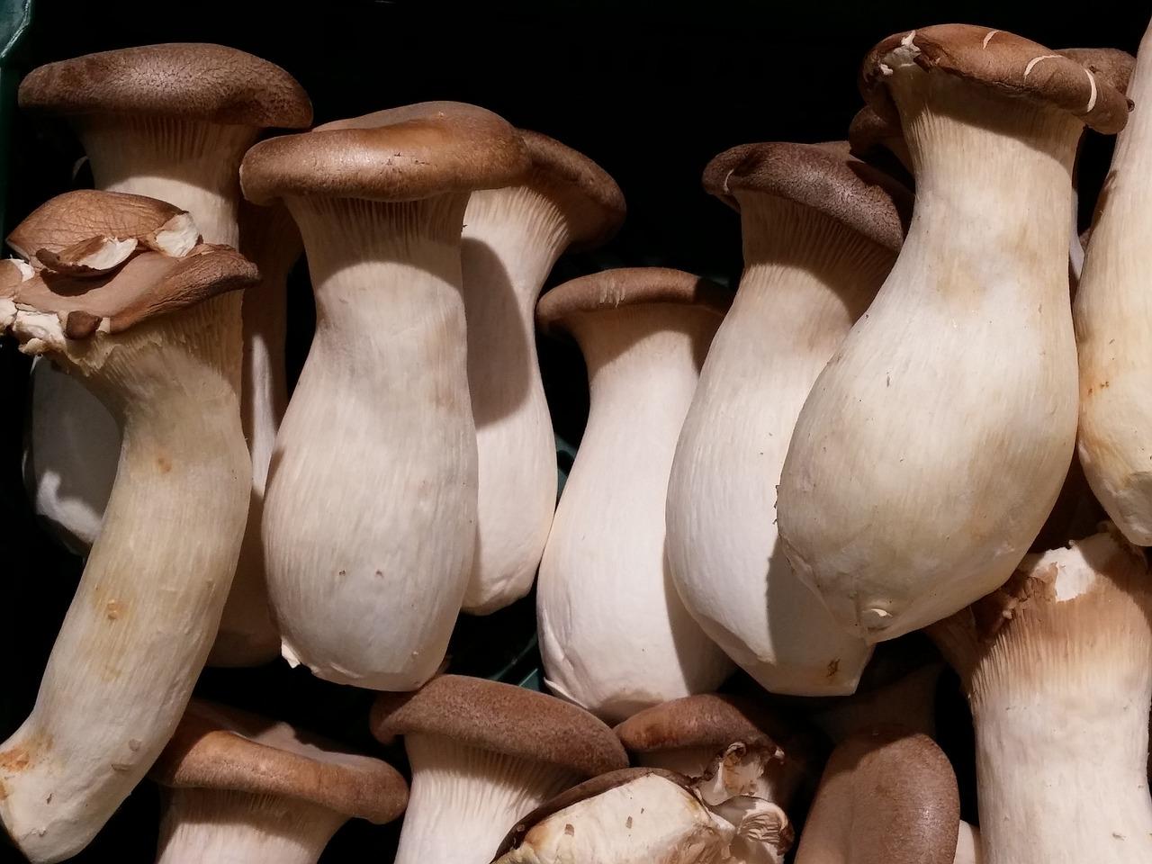 funghi alioli