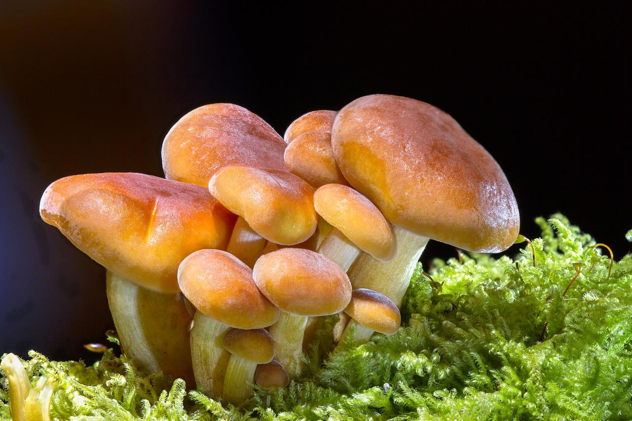 funghi fritti